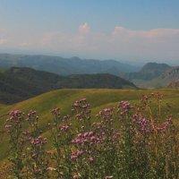 Последние дни лета на перевале Гум-Баши. Маринское ущелье. Высота более 2100 м. :: Vladimir 070549