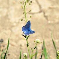 Бабочка из бабьего лета :: Ольга Голубева