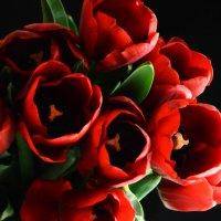 Букет алых тюльпанов :: Татьяна