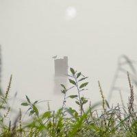 Туманный блюз. :: Виктор Заморков