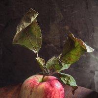 Просто яблоко :: Юрий Клёнов