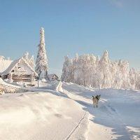 Морозный день :: Тамара Андреева