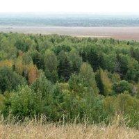 Вид на Селищенское болото :: Ирина Останина