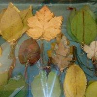 Засушенные листья для составления сухих букетов. Эта коллекция листьев была собрана в начале 20 века :: Светлана Калмыкова