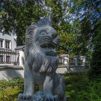 Лев Губернаторского сада :: Сергей Цветков