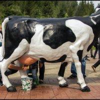 Фестиваль Молочная страна :: Алексей Патлах