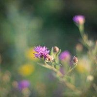Цветочки :: Астарта Драгнил