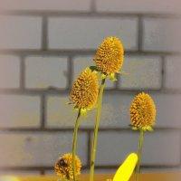 Цветы у дома облетают :: Фотогруппа Весна.