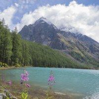 цветы хороши летом...и всегда:) :: liudmila drake