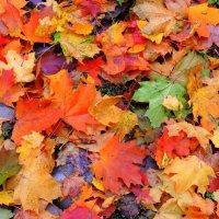 Осенние краски :: Елена Якушина
