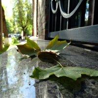 Осень :: Fededuard Винтанюк