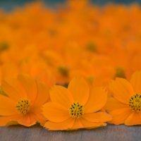 Цветочное пламя :: azer Zade