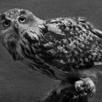 Ночная птица :: Татьяна Кадочникова