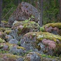 Лесные обитатели :: Константин