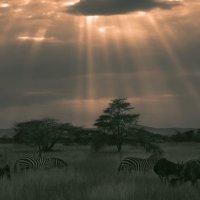 Гармония саванны!...Танзания. :: Александр Вивчарик