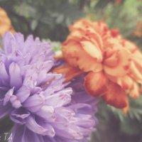цветы :: Александра Тетерина