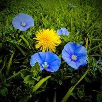 Три цвета лета. :: Ron Леви