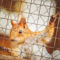 В Лесу :: Света Кошкарова