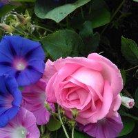 Утро начинается с цветов :: Mariya laimite