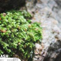 Микроджунгли на камнях :: Son Eun Kuyol