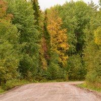 Вот и осень :: petyxov петухов