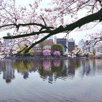 Токио Парк Ueno :: Swetlana V