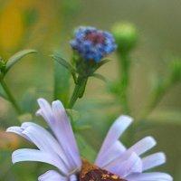 бабочка :: Дмитрий Барабанщиков