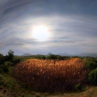 остров золотых колосков :: viton