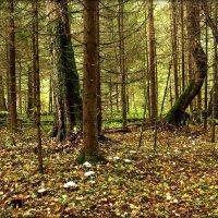 """""""Я в осеннем лесу собираю грибы..."""" :: Елена Швецова"""
