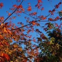 Яркие листья сентября :: Екатерина Торганская