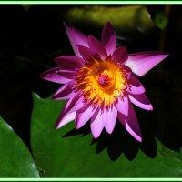Там лилии цветут :: Николай Волков