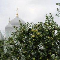 Дивеевские яблоки :: Николай Варламов