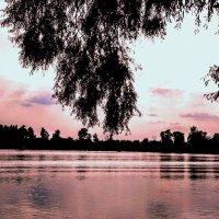 Река Десна на закате (Киевская область) :: Наталия Каминская