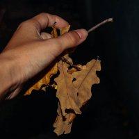 отпускаю осень из рук :: Света Кондрашова