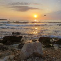 Вечерний свет над морем :: Эля Юрасова