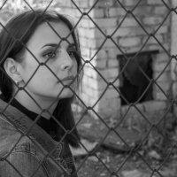 Прекрасная Даша за забором из сетки :: Александр Швецов