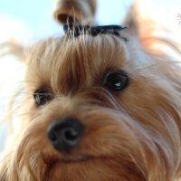 Моя любимая собака :: Екатерина Гриб