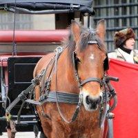 одна лошадиная сила:-) :: Olga