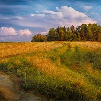 Простая деревенская красота... :: Александр Никитинский