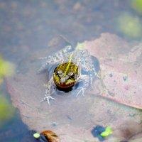 Красота в воде не тонет! :: A. SMIRNOV