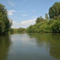 Река Чумыш :: Юрий Борзов