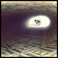 свет в конце тоннеля... :: ака Японец