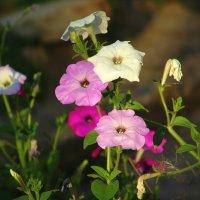 Яркие цветики. :: Оля Богданович