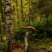 несьедобный гриб :: Константин Шабалин