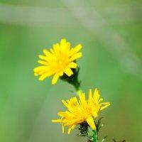Цветы осени :: Владимир Лазарев