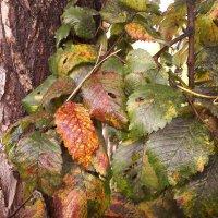 Осенние листья :: Елена *
