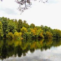 Осень отражается в воде. :: Маргарита ( Марта ) Дрожжина