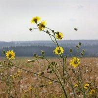 От цветка к цветку :: Валерий Талашов