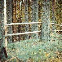 Осенняя прогулка :: Паша