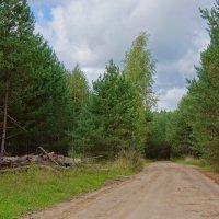 Дорога через лес... :: марк